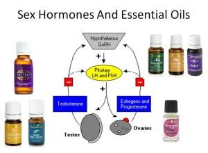 Sex und Hormone