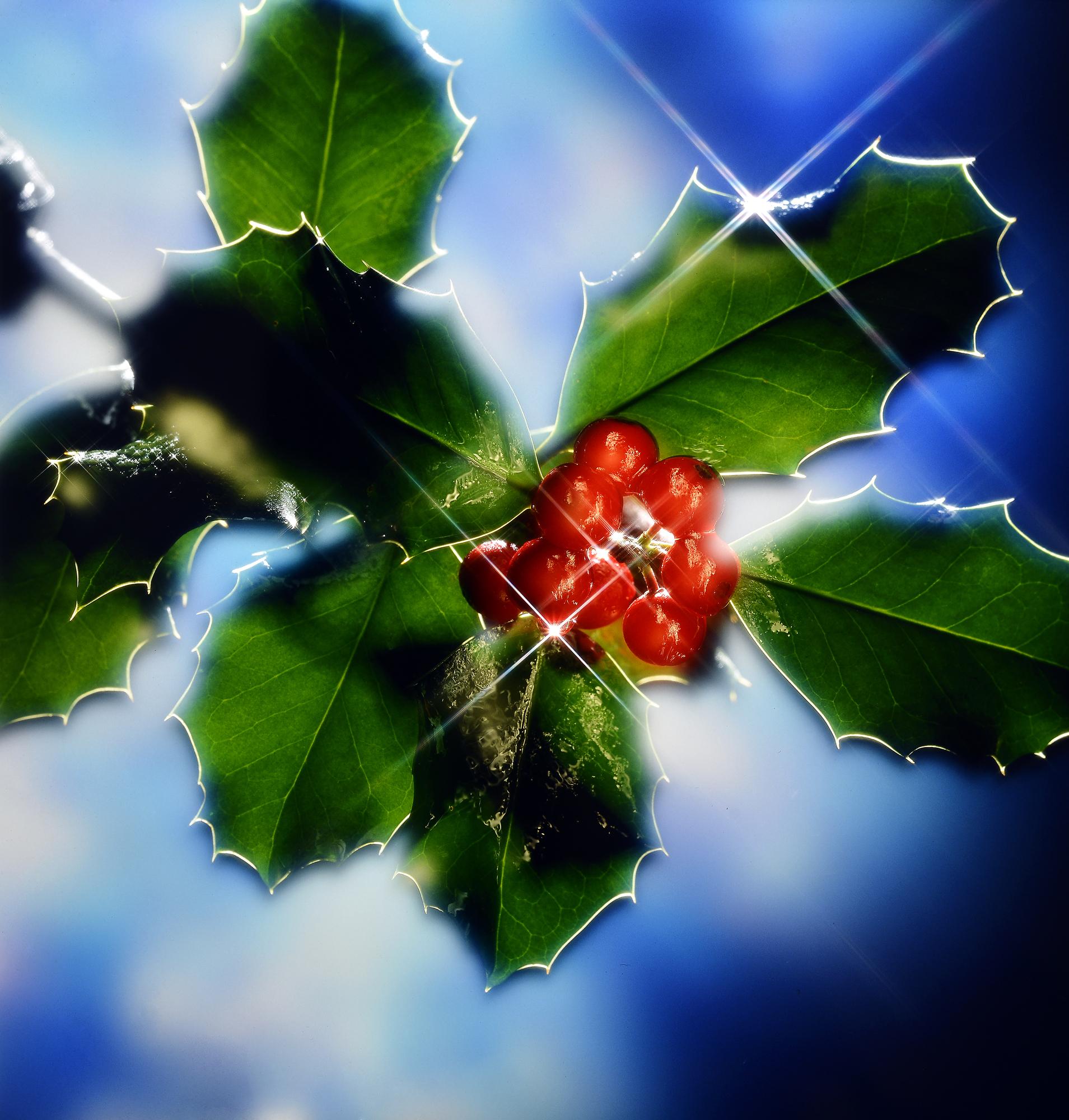 Christmas Spirit - Die Seele von Weihnachten - Young Living ...