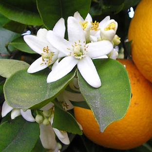 Slideshow-left-neroli-2